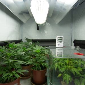 grow operation house