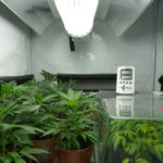 grow house operation